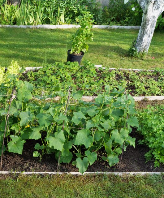 Prečo pestovať ekologicky?