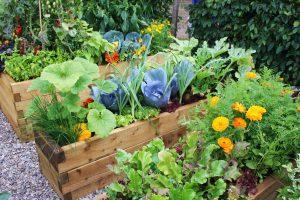 Odpudzovanie škodcov za pomoci byliniek