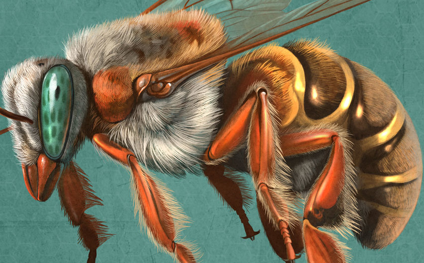 Melipona beecheii Kubánska včela