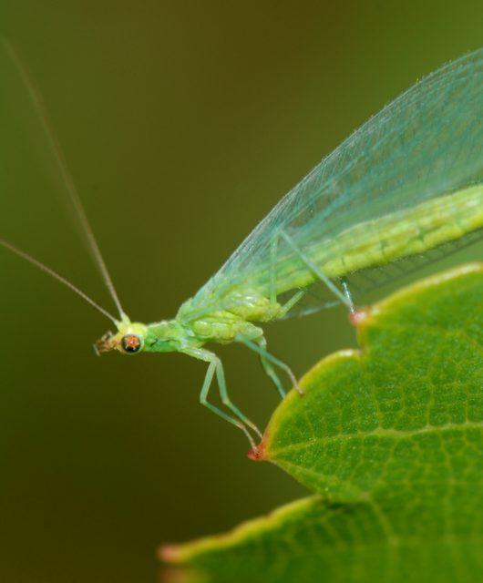 Užitočný hmyz
