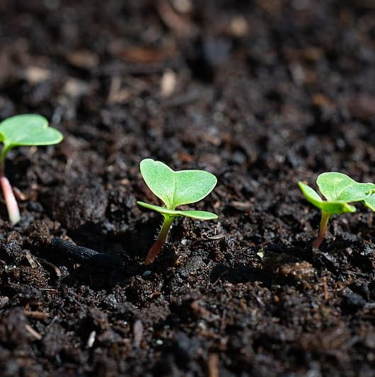baktérie, pôda a rastliny