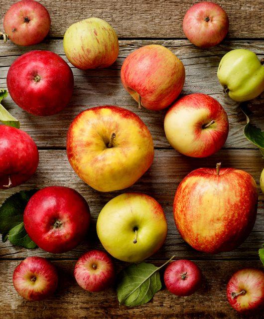 Jabloň - choroby a škodcovia