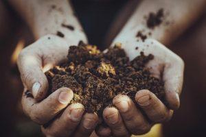 pôdna mykorhíza