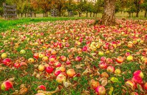 Prečo nepodceniť jesenný postrek